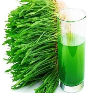 THE MIRACLE WHEATGRASS
