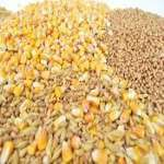 Cereals And Grains